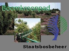 Staatsbosbeheer Boomkroonpad